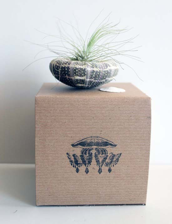 Airplant Gifts