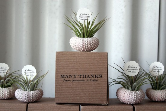 Airplant party and wedding favors by Robin Charlotte