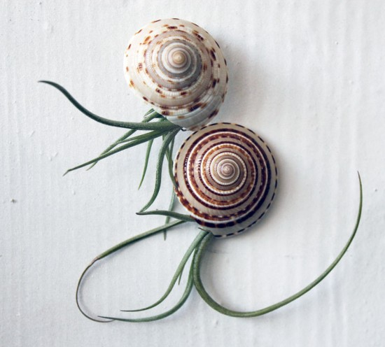 Airplant and shell wall art