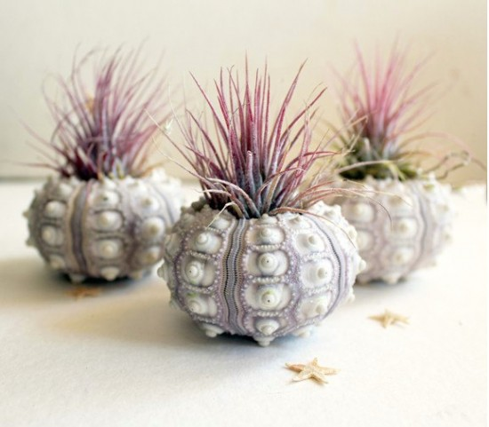 Airplant Thank You Gifts and Wedding Favors